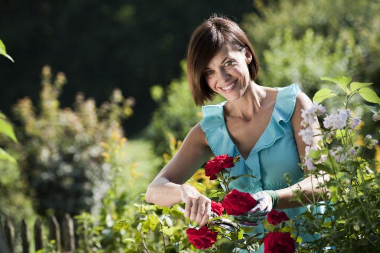 Így neveld a rózsáid éveken át, hogy csodaszépek legyenek