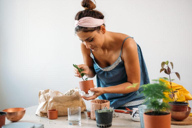 Színesen virágzó szobanövények, amelyek garantáltan vidámabb hangulatot hoznak a lakásba