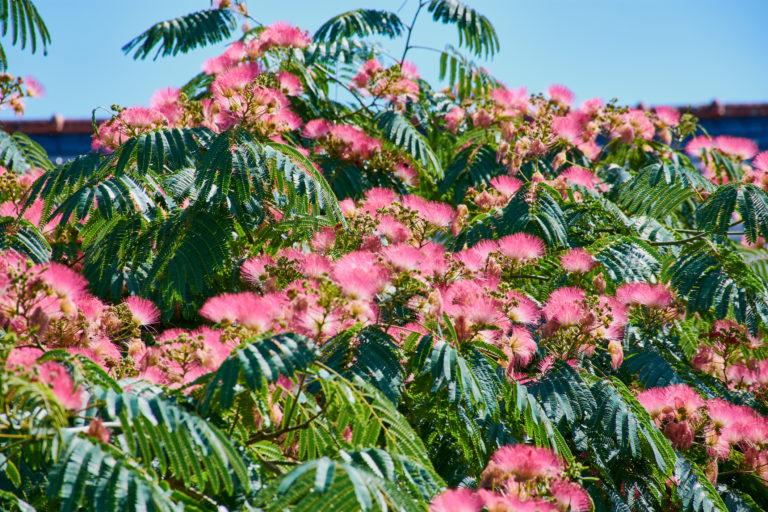 5 kivételes növény a kertben és az erkélyen