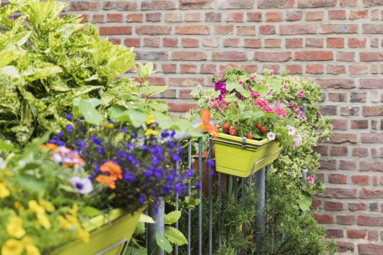 5 növény, amely egy szeles erkélyen is jól érzi magát