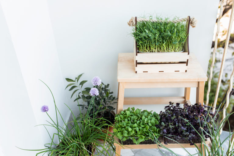 Ezek a fűszernövények nem hiányozhatnak egy konyhakertből sem