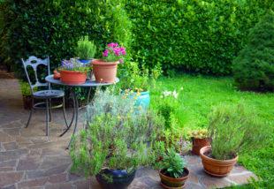 A 4 legjobb növény a teraszra – Ezek közül válassz!