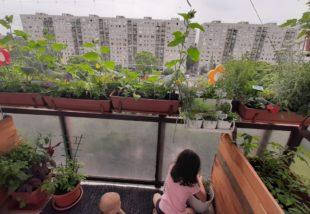 Ahol 10 kg uborka terem a balkonon – Egy káprázatos panelkertre bukkantunk!