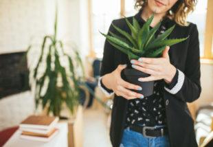 Aloe verát tartasz otthon? Így gondozd ezt a csodanövényt, hogy jól érezze magát nálad
