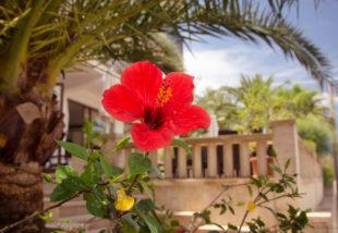 Lazulj otthon mediterrán környezetben! Tuti tippek a mediterrán terasz kialakításához