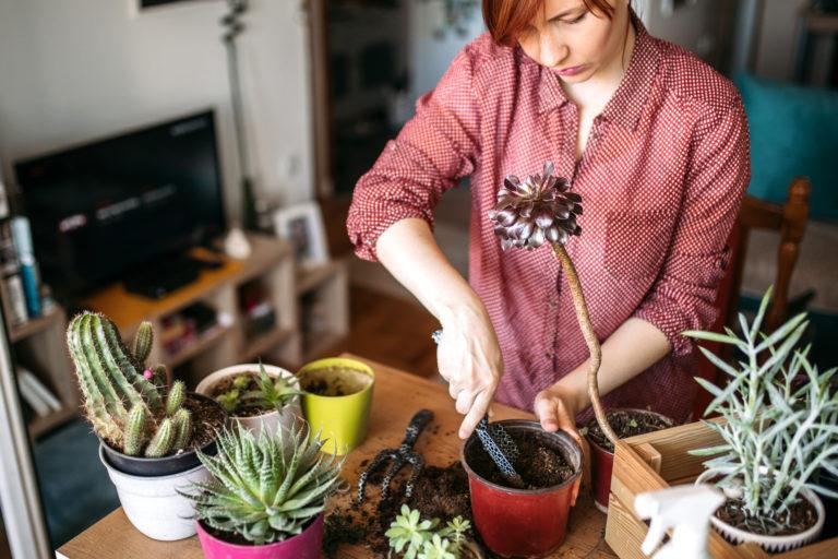 Konyhai hulladékból műtrágya – Ezeket ne a kukába, hanem a növényre dobd