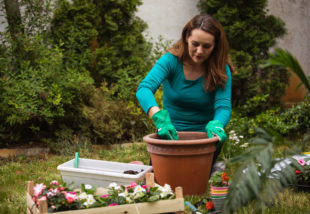 Ezeket a tanácsokat mindenképp fogadd meg, ha kiköltözteted az udvarra a szobanövényedet – VIDEÓ