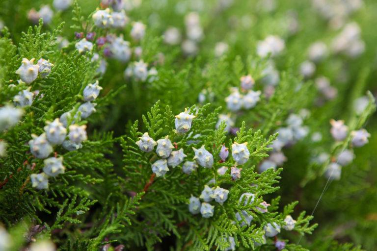 Ezek a leggyakoribb mérgező növények a kertben – Nálad is megtalálhatók?