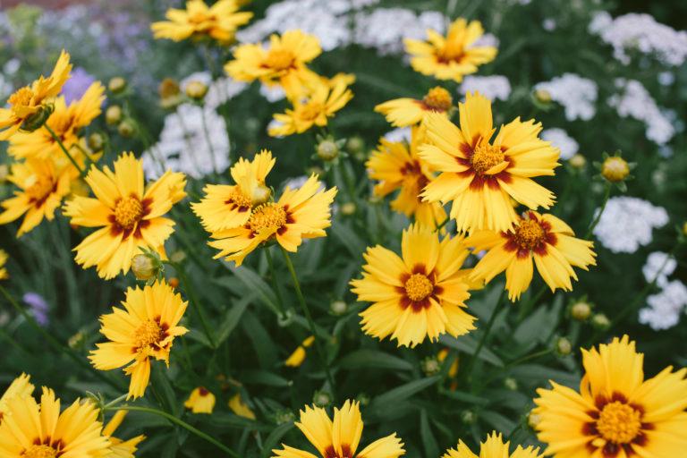 Napos és száraz a kerted? Ezek a növények jól fogják ott érezni magukat