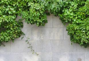 Elcsúfítja a kertedet a szomszéd ronda fala? Segítünk, hogy takard el