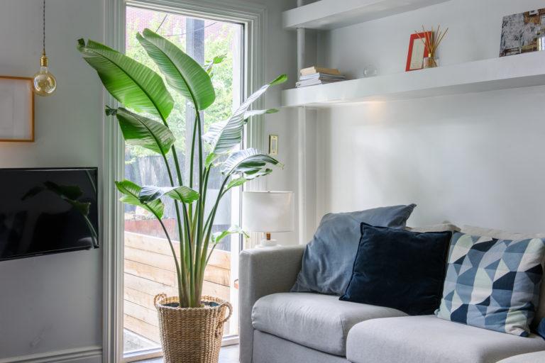 5 nagy levelű növény, mely segít kitölteni az üres tereket a lakásban