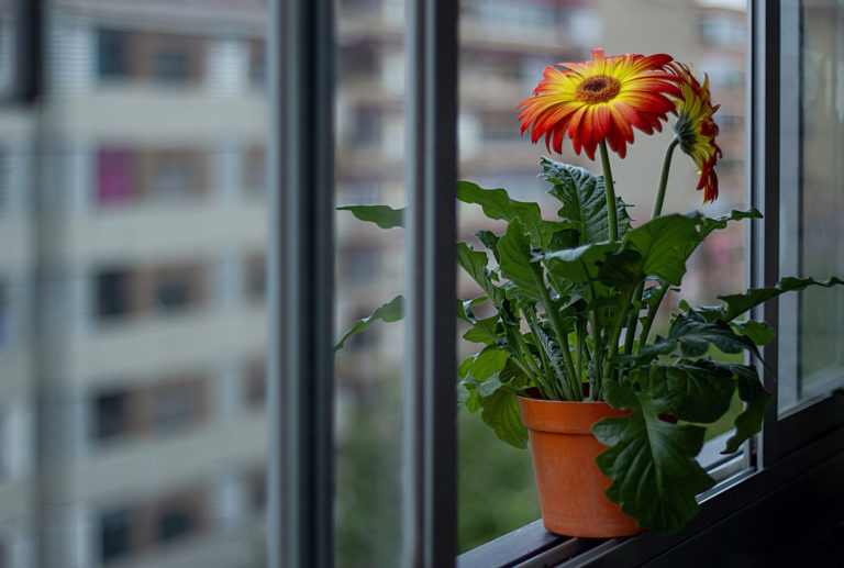 Ez a 5 növény a legjobb választás, ha a hálószobába keresel zöld kiegészítőt