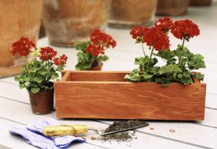 5 tipp, hogy jól érezzék magukat a növényeid cserépben vagy virágládában