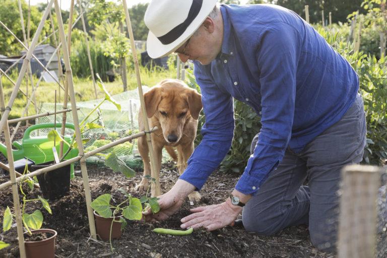 Nyári tennivalók, melyeknek hála még ősszel is virágos lesz a kerted