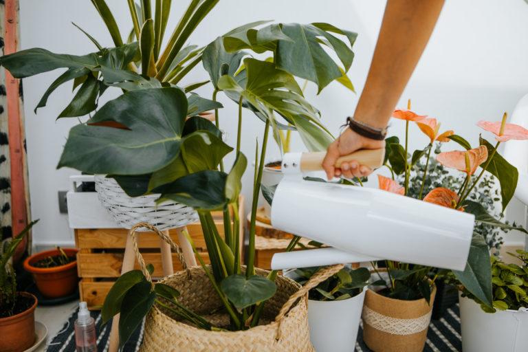 5 tipp, amivel nem sínylik meg a szobanövényeid a nyaralást