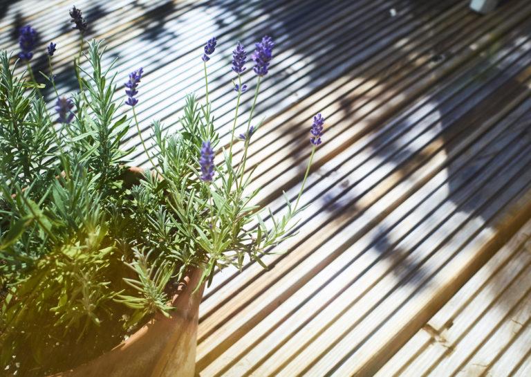 Az 5 leghatásosabb növény és fűszer szúnyogok ellen