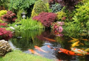 Halakkal szeretnéd feldobni a kerti tavad? Ezeket a fajtákat válaszd