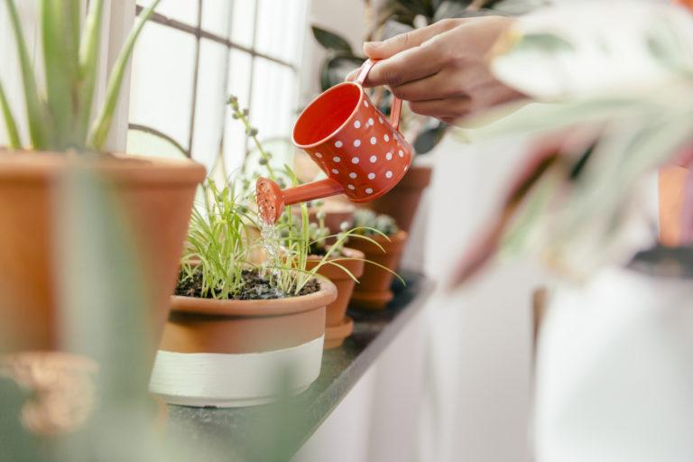 Ezzel a zseniális trükkel nem fognak elszáradni a növényeid