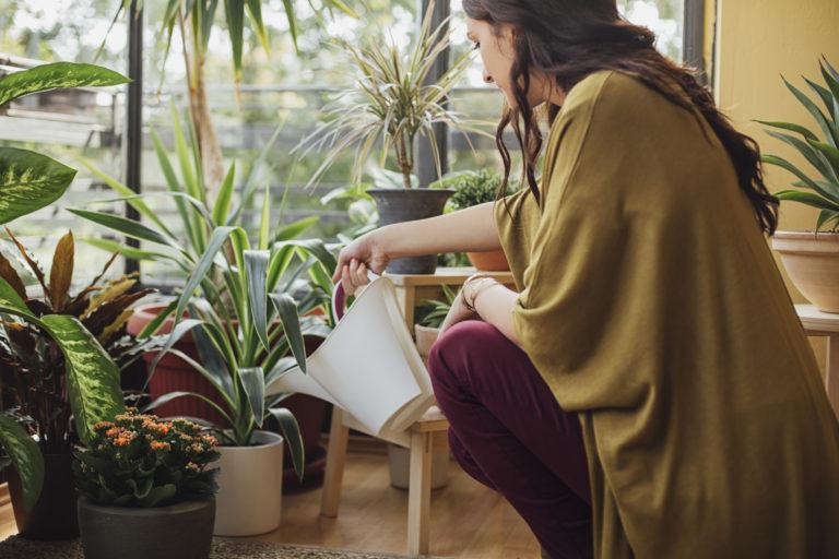 Így NE gondozd a növényeid – Az 5 legnagyobb hiba, ami könnyedén elkerülhető lenne