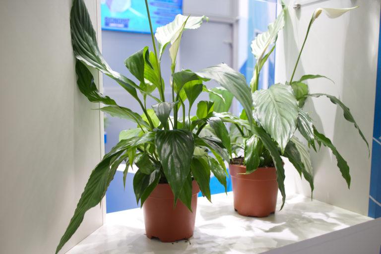 5 jel, ami arra utal, hogy a növényed nem kap elegendő vizet