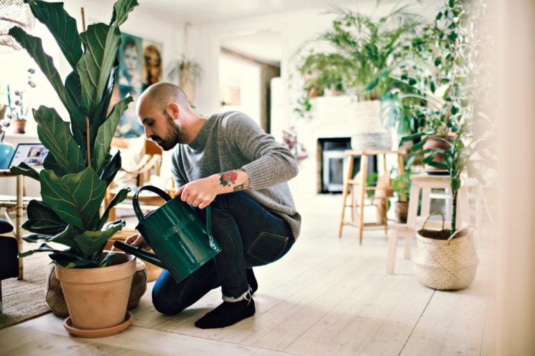 Furcsa trükk – Tényleg érdemes sörrel öntözni a növényeket?