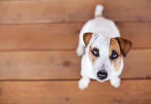 Kisállat és a megfelelő padló – Segítünk jól dönteni
