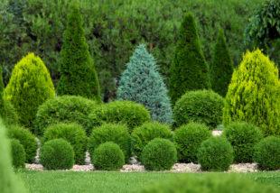4 kisebb fa, mely egy kicsi kertben is elfér