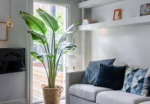 Így gondozd a banánfát, hogy jól érezze magát otthonodban