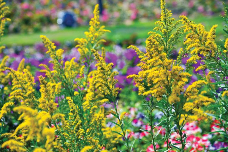 Ez az 5 virág az őszi hónapokban is színpompában tartja a kerted