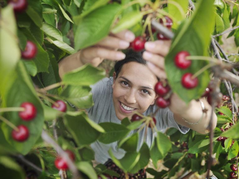 5 gyümölcsfa, amely kezdő kertészek kezei között is jól érzi magát