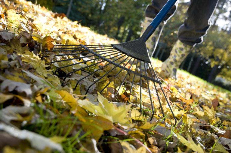 Őszi gyepgondozás – Ezek a legfontosabb teendők