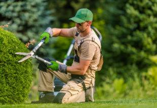 A legnépszerűbb sövényfajták, amelyek egyszerre díszítik és védik a kerted