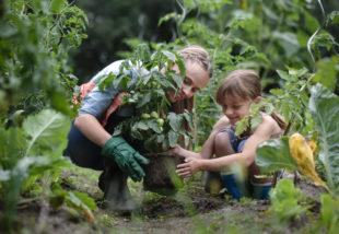 Organikus kertészkedés – Mi is ez és hogyan lehet megvalósítani?